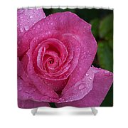 Pink Rose, Rosa Shower Curtain