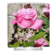 Pink Rose... Roses Shower Curtain