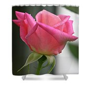 Pink Rose Squared Shower Curtain