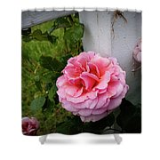 Pink Rose Shower Curtain by Valeria Donaldson
