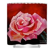 Pink Rose With Dew Drops Jenny Lee Discount Shower Curtain