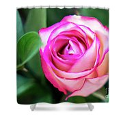 Pink Rose With Leaves Shower Curtain