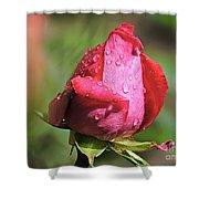 Pink Rosebud Shower Curtain