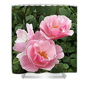 Pink Roses 1 Shower Curtain