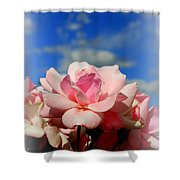 Pink Roses Against The Beautiful Arizona Sky Shower Curtain
