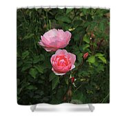 Pink Roses In A Garden Shower Curtain