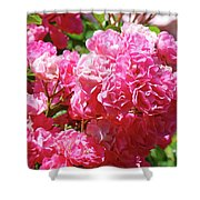 Pink Roses Summer Rose Garden Roses Giclee Art Prints Baslee Troutman Shower Curtain