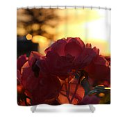 Pink Roses Sunset Shower Curtain