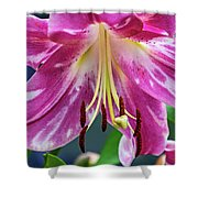 Pink Rules 2 Shower Curtain