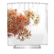 Pink Sakura Shower Curtain