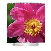 Pink Single Peony Shower Curtain