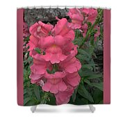 Pink Snapdragons Shower Curtain