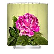 Pink Speckled Rose 1 Shower Curtain