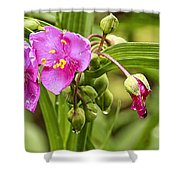 Pink Spiderwort Drip Drops Shower Curtain