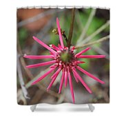Pink Spikes Shower Curtain
