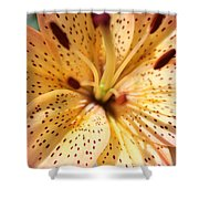 Pink Spotted Lilly Shower Curtain