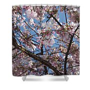 Pink Spring Blossoms Shower Curtain