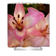 Pink Spring Lilly Shower Curtain