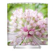 Pink Summer Shower Curtain