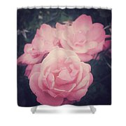 Pink Summer Roses Shower Curtain