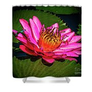 Pink Summer Water Lily Shower Curtain