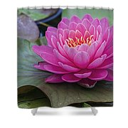 Pink Surprise Shower Curtain by Jeff Swanson