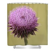 Pink Thistle Shower Curtain