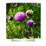 Pink Thistle Study 1 Shower Curtain