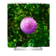 Pink Thistle Study 2 Shower Curtain