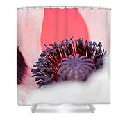 Pink Through The Poppy Shower Curtain