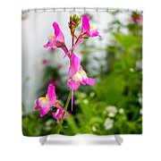 Pink Toadflax Shower Curtain