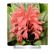 Pink Trendles Shower Curtain