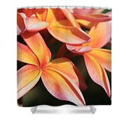 Pink Tropical Plumeria Makawao Maui Hawaii Shower Curtain