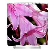 Pink Trumpet Lilies Shower Curtain