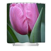 Pink Tulip Beauty Shower Curtain