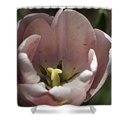 Pink Tulip Center Squared Shower Curtain