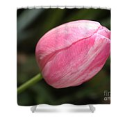 Pink Tulip Closeup Shower Curtain
