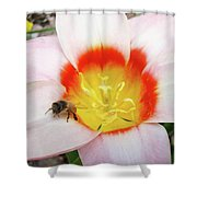 Pink Tulip Flower Orange Art Prints Honey Bee Baslee Troutman Shower Curtain