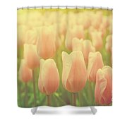 Pink Tulip Flowers In The Garden On Sunny Day In Spring Shower Curtain