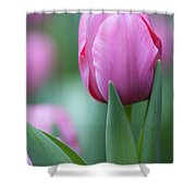 Pink Tulip Love Shower Curtain