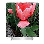 Pink Tulip Shower Curtain