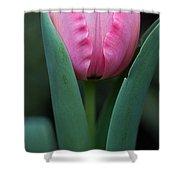 Pink Tulip Panoramic Shower Curtain