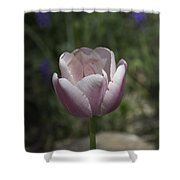 Pink Tulip Squared Shower Curtain
