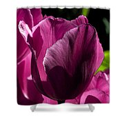 Pink Tulip Watercolor Shower Curtain