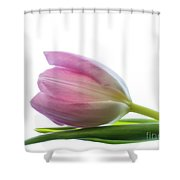 Pink Tulips 2 Shower Curtain