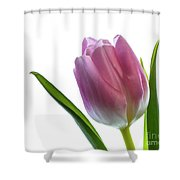 Pink Tulips 3 Shower Curtain