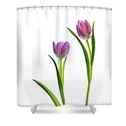Pink Tulips 4 Shower Curtain