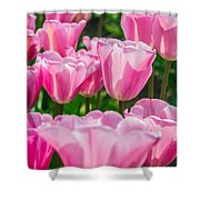 Pink Tulips Aglow Shower Curtain