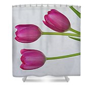 Pink Tulips And White Brick Wall Shower Curtain