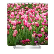Pink Tulips At Floriade In Canberra, Australia Shower Curtain